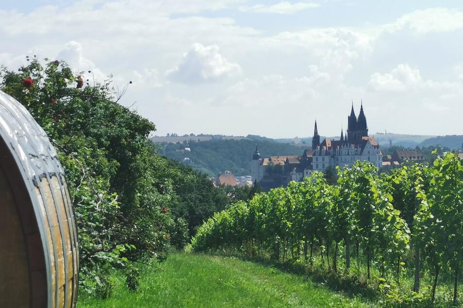 """Aussichtspunkt """"Weinsicht Proschwitz"""" mit Blick auf die Albrechtsburg Meissen."""