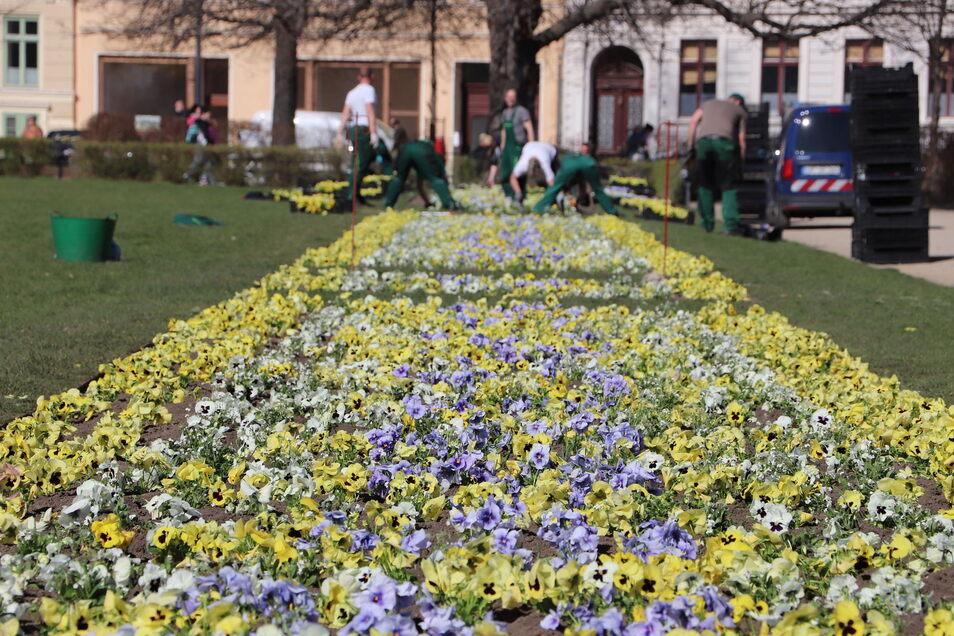 Die Gärtner vom Städtischen Betriebshof haben die schönen, letzten Märztage genutzt für die neue Beflanzung des Wilhelmsplatzes.