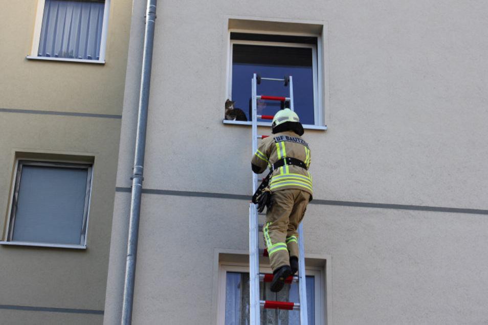 Eine junge Katze wurde am Donnerstag in Bautzen von Feuerwehrleuten aus einer misslichen Lage befreit.