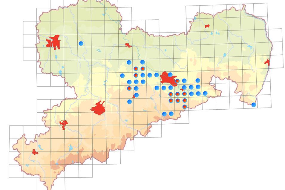 Vorkommen der Kleinen Hufeisennase in Sachsen ab 2005 (Blaue Punkte), Wochenstuben (Rote Punkte)