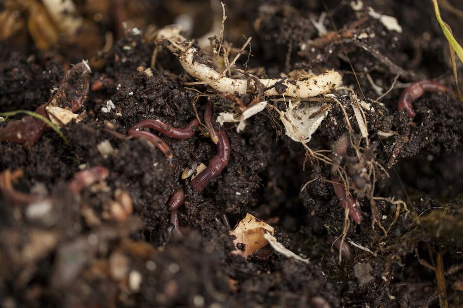 Wer keinen Garten hat, muss nicht auf das Kompostieren verzichten. Küchenabfälle können auch auf dem Balkon verwertet werden. Und dafür braucht es nicht mal viel Platz.