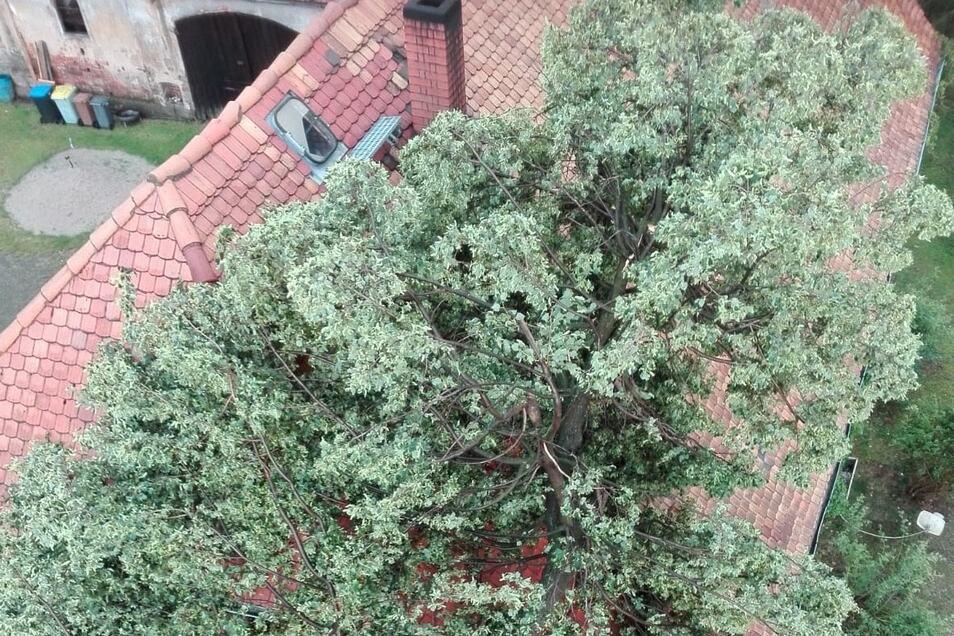 So landete der Baum auf dem Dach.