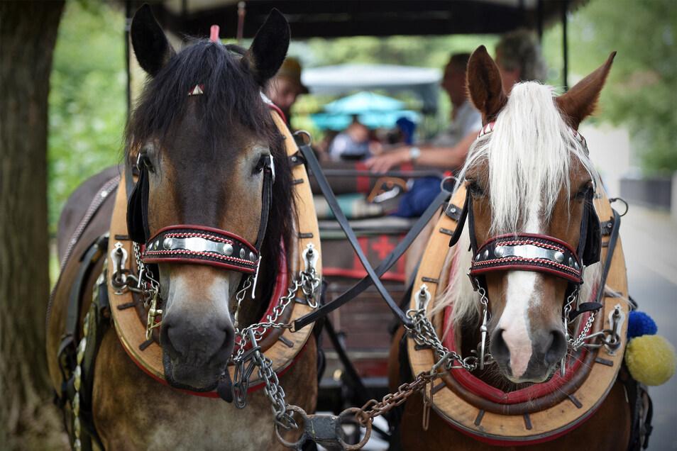 Pferde und Wagen waren für den Ausflug geschmückt - auch mit den Oberlausitzfarben Gelb und Blau.