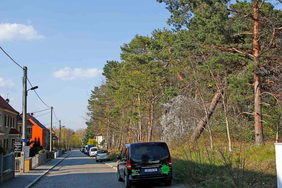 In einem Wäldchen zwischen Dittrichstraße und Garnisonsplatz in Kamenz müssen Bäume gefällt werden. Sie sind vom Borkenkäfer befallen.