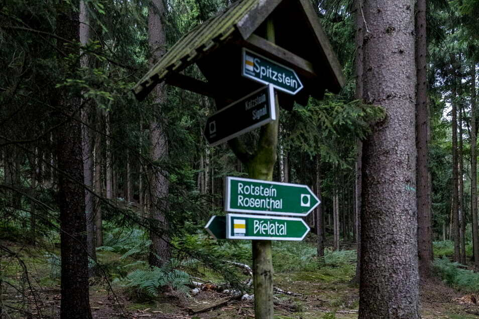 Rund um den Spitzstein bei Cunnersdorf müssen Waldwege gesperrt werden. Schuld hat der Borkenkäfer.
