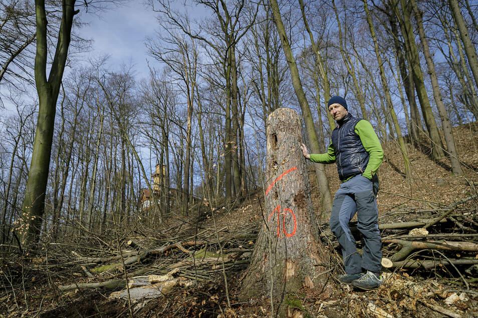 Steffen Leder steht im Görlitzer Weinbergareal an einer gefällten Fichte. Im Hintergrund ist das Weinberghaus zu erkennen.