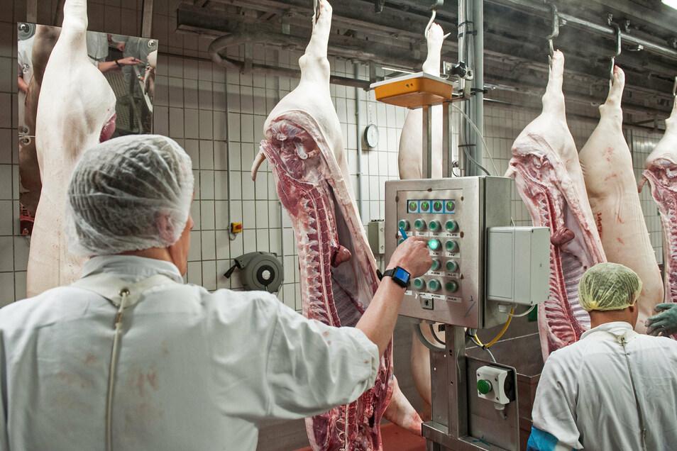 Schweinehälften passieren einen der Kontrollterminals im Zerlegebereich eines Schlachthofs.
