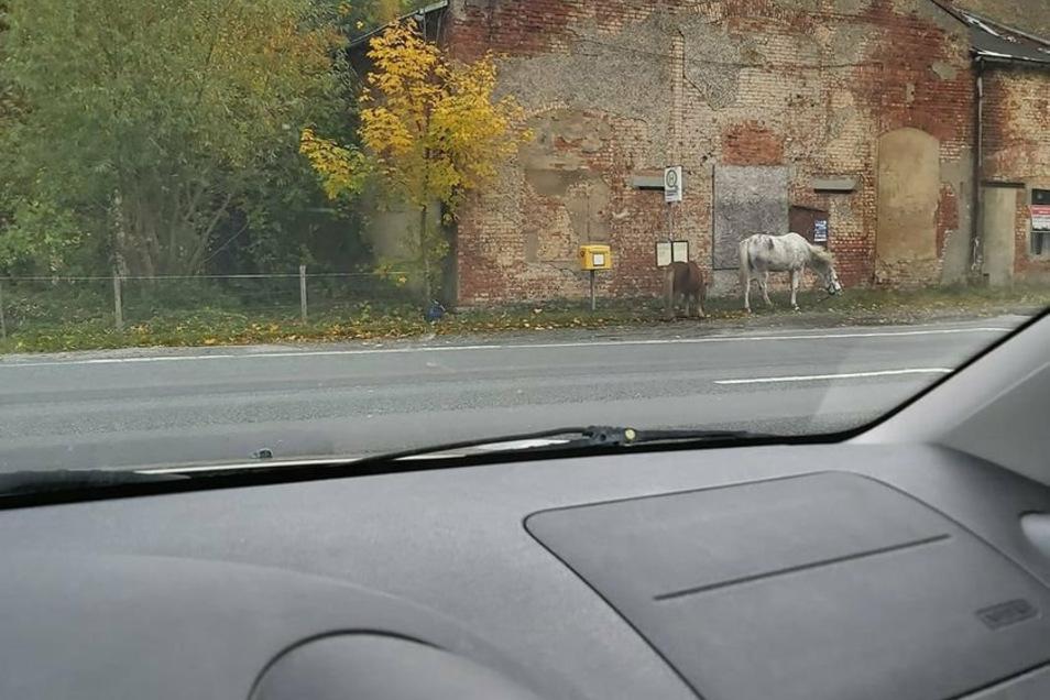"""""""Zadkiel"""" und Pony """"Bobby"""" suchen sich auch immer mal wieder eigenständig Weidegrund direkt an der Straße vor dem ehemaligen """"Gasthaus Schwimmer"""". Foto: privat"""