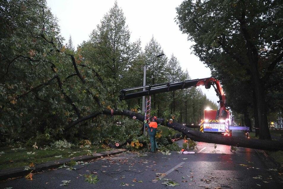 Der Baum blockierte die Straße und zerriss die Oberleitung der Straßenbahn.
