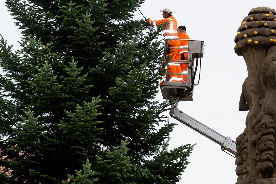 Der Bischofserdaer Weihnachtsbaum bekommt seine Lichterkette.