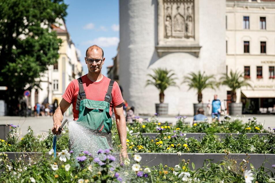 Die Hochbeete auf dem Görlitzer Marienplatz werden von Mitarbeitern des Städtischen Betriebshofes bewässert - hier von Robert Grohmann.