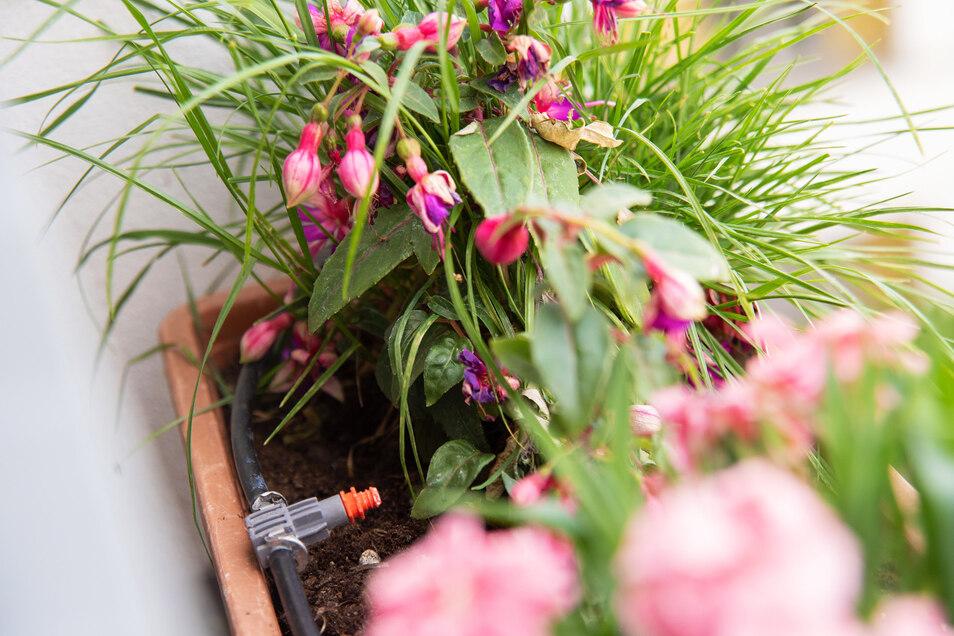 Was im Garten zu viel ist, kann ganz praktisch getauscht werden.