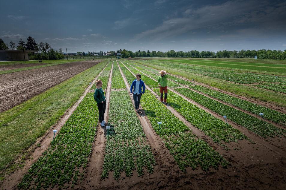 Felder von Bio-Bauern werden für die Produktion genutzt.
