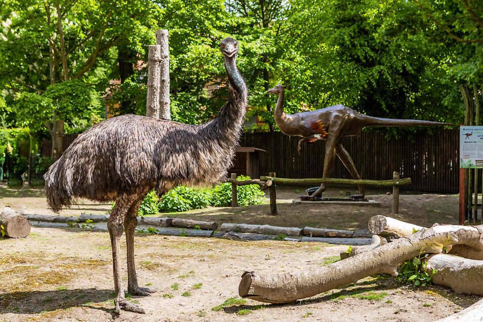 Emu Hilde vorn ist mit den Sauriern verwandt. Daher steht jetzt im Gehege auch ein Dromiceiomimus.