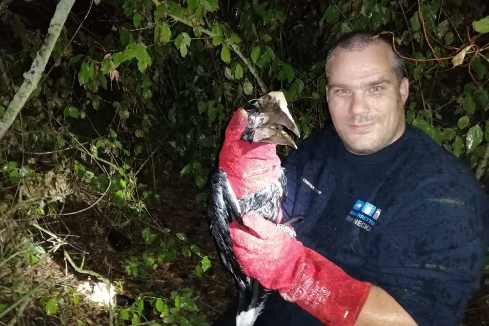 Ein Mitarbeiter der Berufstierrettung hält den Nashornvogel in den Händen. Das Tier, das zusammen mit einem Löwenbaby bei einem Auffahrunfall entdeckt wurde und davon flog, ist eineinhalb Tage später eingefangen worden.