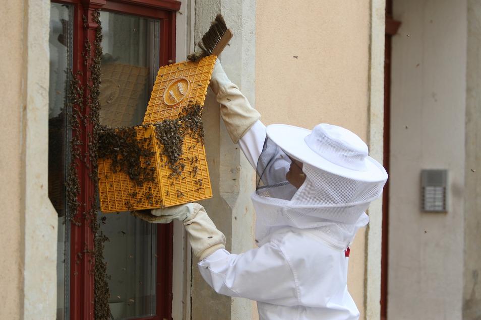 Imkerin Annekatrin Bruder kümmerte sich um das Bienenvolk in der Schmiedestraße.