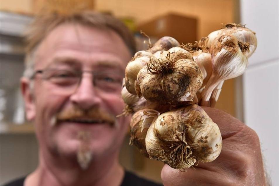 Garantiert mehr Aroma: Heiner Hänel präsentiert selbst gezogenen Knoblauch.