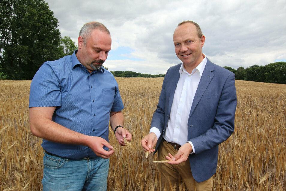 Sachsens Landesbauernpräsident Torsten Krawczyk und der Landwirtschaftsminister Wolfgang Günther (Bündnis 90/Die Grünen) haben sich beim Auftakt der Erntesaison ein Bild vom aktuellen Zustand der Felder bei Großweitzschen gemacht.