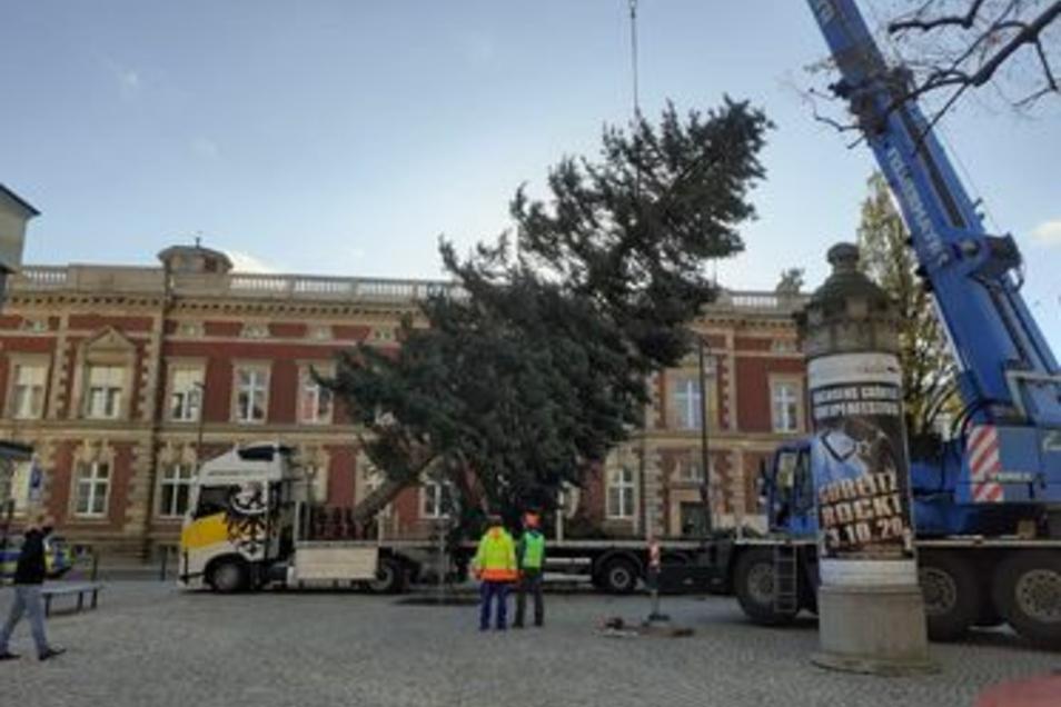 Steht jetzt auf dem Platz der Friedlichen Revolution: der nächste Weihnachtsbaum in Görlitz.