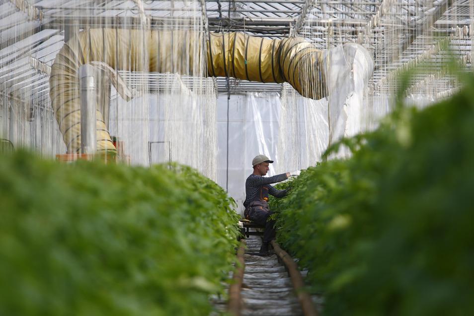 Während viele der Verkäuferinnen mittlerweile in Kurzarbeit sind, müssen andere Kollegen den Betrieb auf dem Bauernhof aufrecht erhalten.