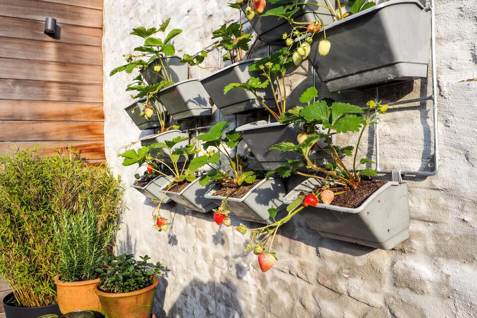 Vertikale Gärten lassen sich nicht nur aus Holz gestalten.