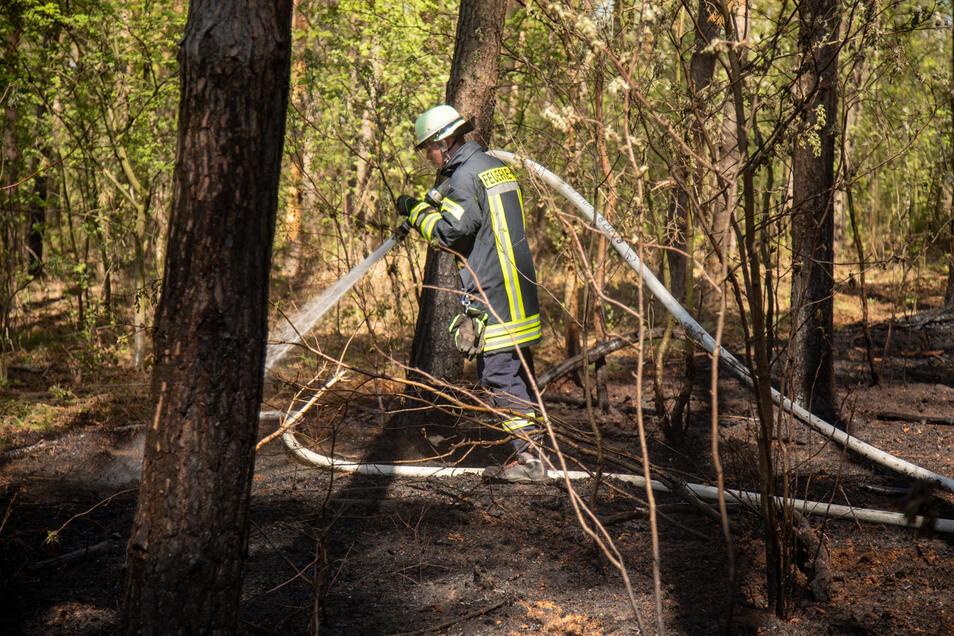 Donnerstagmittag musst die Feuerwehr zu einem Waldstück zwischen Göda und Spittwitz ausrücken.