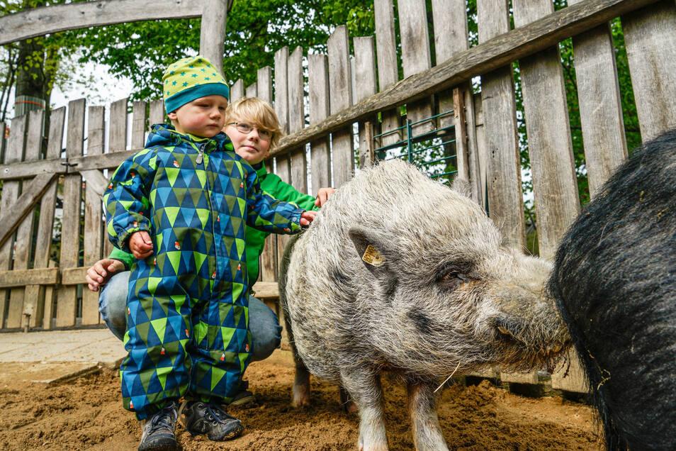Magnus und sein großer Bruder Ragnar aus der Nähe von Stolpen zählten zu den ersten Besuchern im wieder geöffneten Tierpark in Bischofswerda. Vor den Wollschweinen im Streichel-Gehege hatten sie keine Angst.