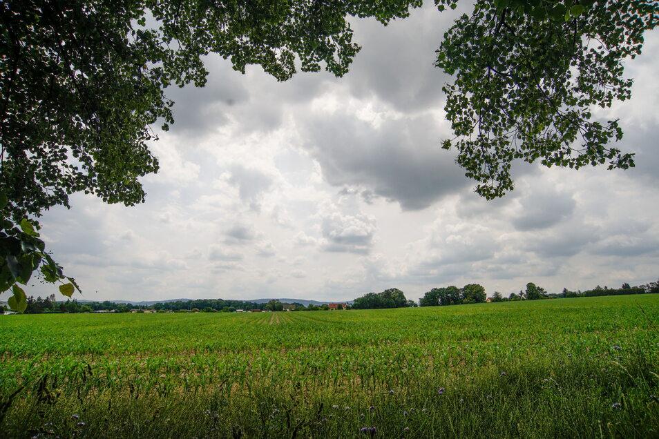 Große Hoffnungen setzt die Stadt auf eine Fläche in Rattwitz: Entsteht hier ein Baugebiet mit Platz für mehr als 140 Eigenheime?