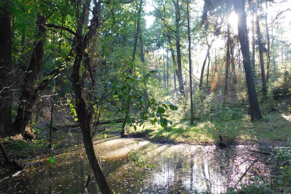 Solche Ein- und Ausblicke bietet das Räderschnitza-Tal zwischen Gablenz und Bad Muskau. Eine Erkundungstour ist für Wanderer, Naturliebhaber, Fotografen sowie große und kleine Entdecker mehr als ein Geheimtipp.
