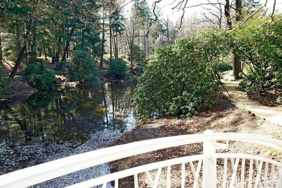Im Kromlauer Park entdecken Spaziergänger auch die japanische Brücke am Inselteich. Geschichte und Geschichten darüber, und den Park, sollen bald Ranger vermitteln.