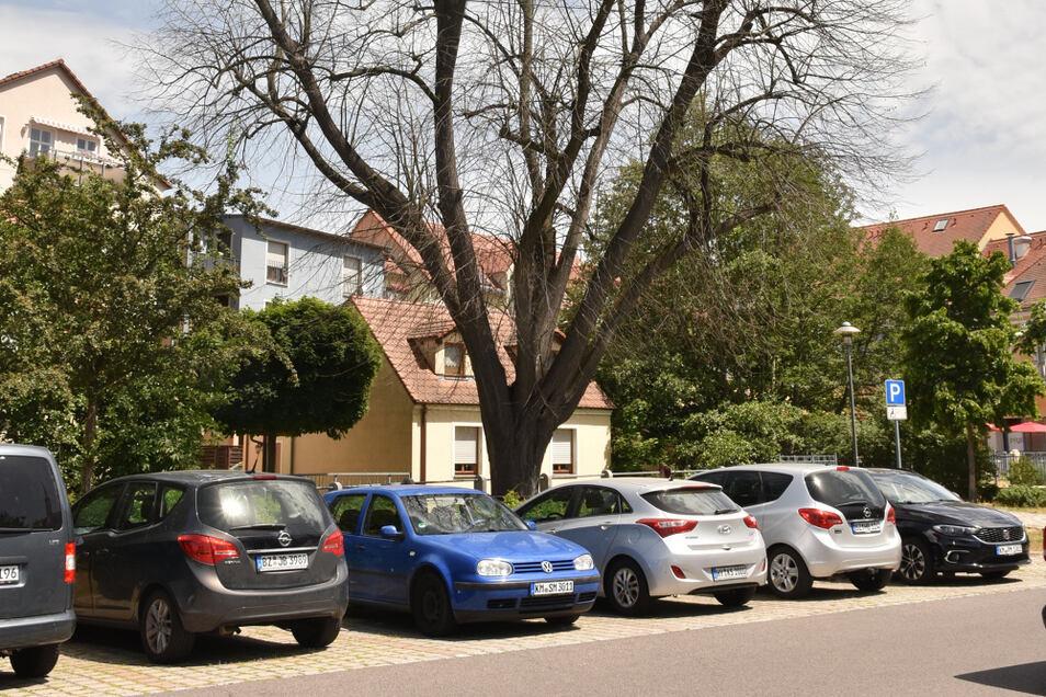 Diese Linde dominiert den Parkplatz in der Senftenberger Straße. Doch in diesem Jahr hat sie nicht ausgetrieben. Ein Baumgutachten soll klären, wie es um den Baum wirklich steht.