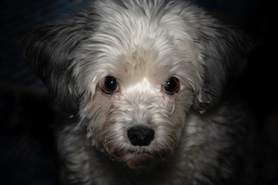 Mehrere Hundewelpen wurden im März 2019 auf der A17 bei einer Polizeikontrolle gefunden. Die Schmuggler stehen jetzt vor Gericht.