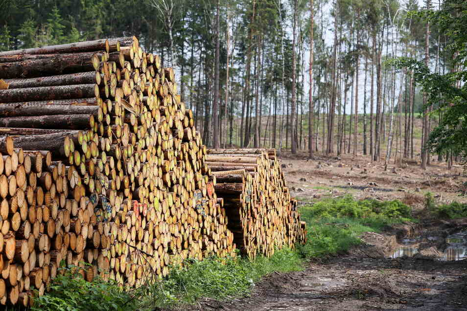 Jede Menge abgeholzte Bäume, die aus dem Wald geschafft werden müssen - wie auf diesem Symbolfoto sieht es auch im Neugersdorfer Stadtwald derzeit aus.