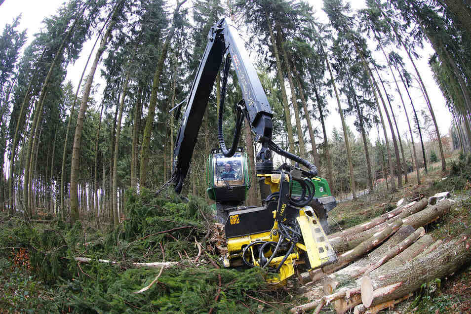 Nach den Dürren und Borkenkäferplagen der letzten Jahre wurde im Löbauer Stadtwald schon viel beschädigtes Holz entfernt.
