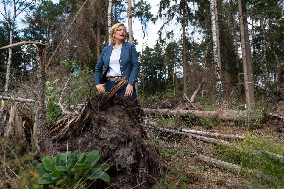 Landwirtschaftsministerin Julia Klöckner begutachtet bei einem Treffen mit Forstministern der Union Schäden im Wald von Moritzburg.