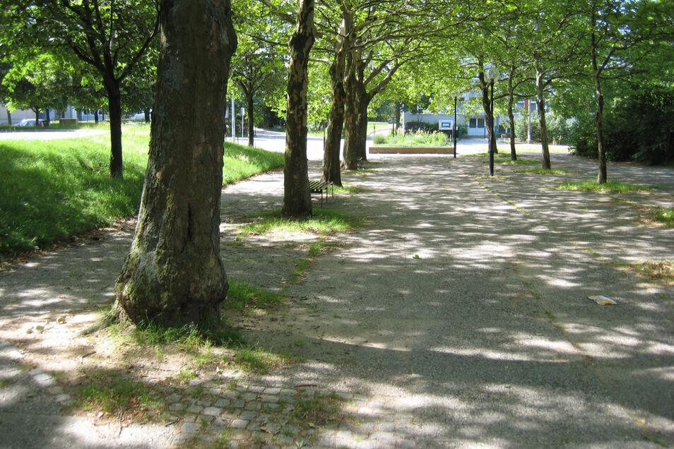 In den Baumscheiben am Boulevard in Königshufen wächst Gras. Um es zu bekämpfen, hat die Stadt hier am Dienstag Glyphosat eingesetzt.