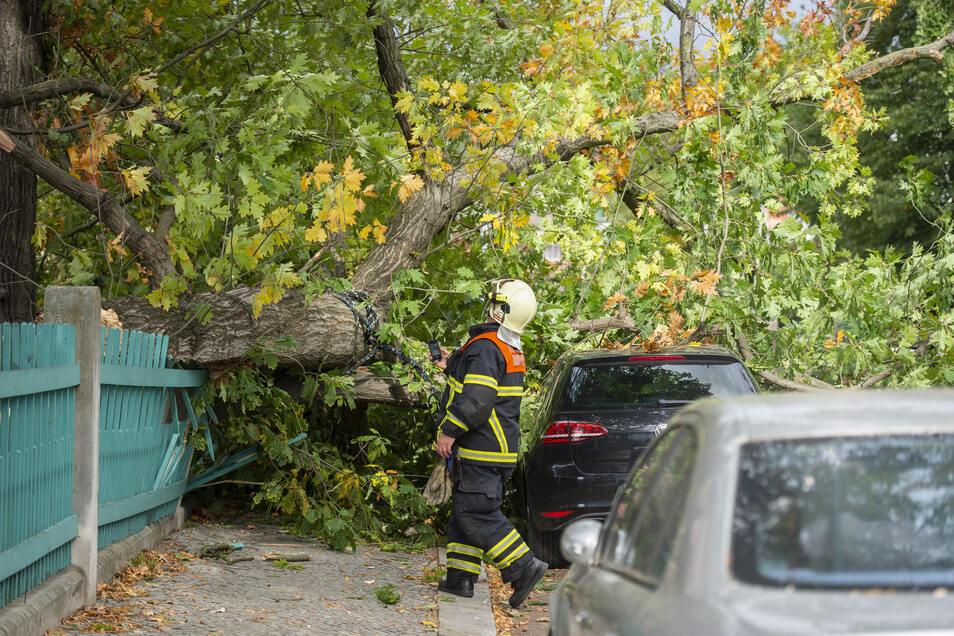 Auf der Gellertstraße krachte ein Baum auf Autos.