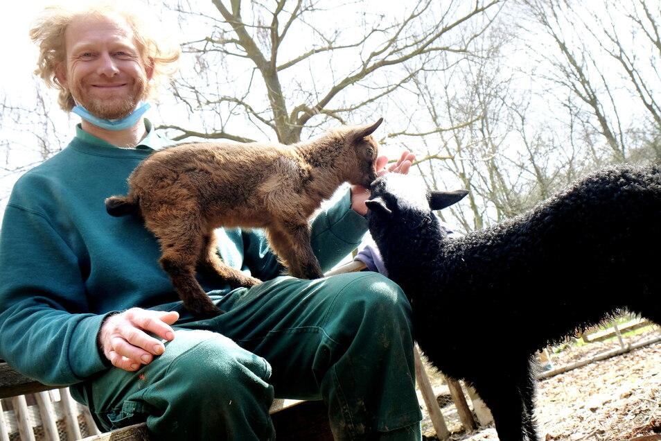 Kann wieder lächeln. Tierparkchef Sven Näther mit Wonder Sheep und Wonder Goat, dem ersten Tiernachwuchs.