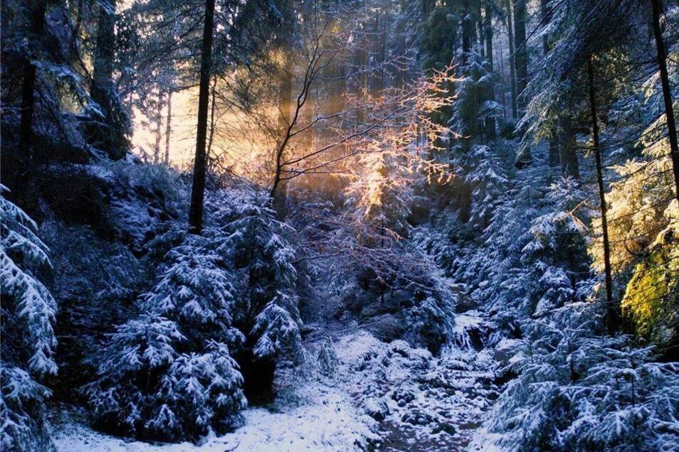 3. Preis  Die Sonnenstrahlen kämpfen sich mit aller Macht durch den Winterwald und tauchen die schneebedeckten Bäume in magisches Licht. Dieses Bild kommt von Sybille Meyer aus Dresden, aufgenommen bei einer Winterwanderung im Großen Zschand zur Webergrotte.
