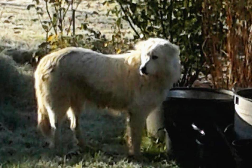 Neukircher fotografierten den herrenlosen Hund und sandten das Bild an die Gemeindeverwaltung.