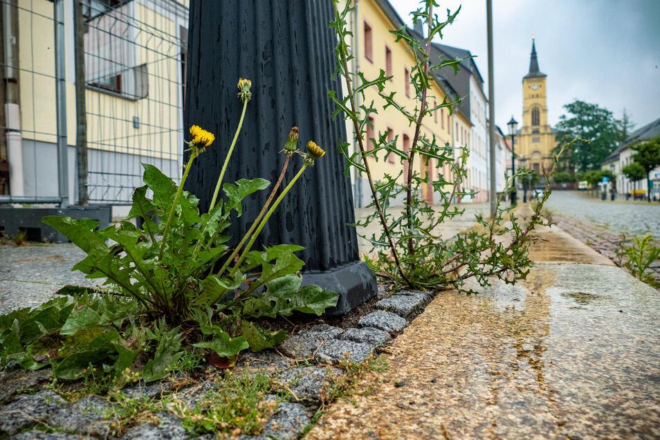 An dieser Laterne am Markt in Hartha haben sich Löwenzahn und Co breitgemacht. Auch im Schnittgerinne wächst das Unkraut.