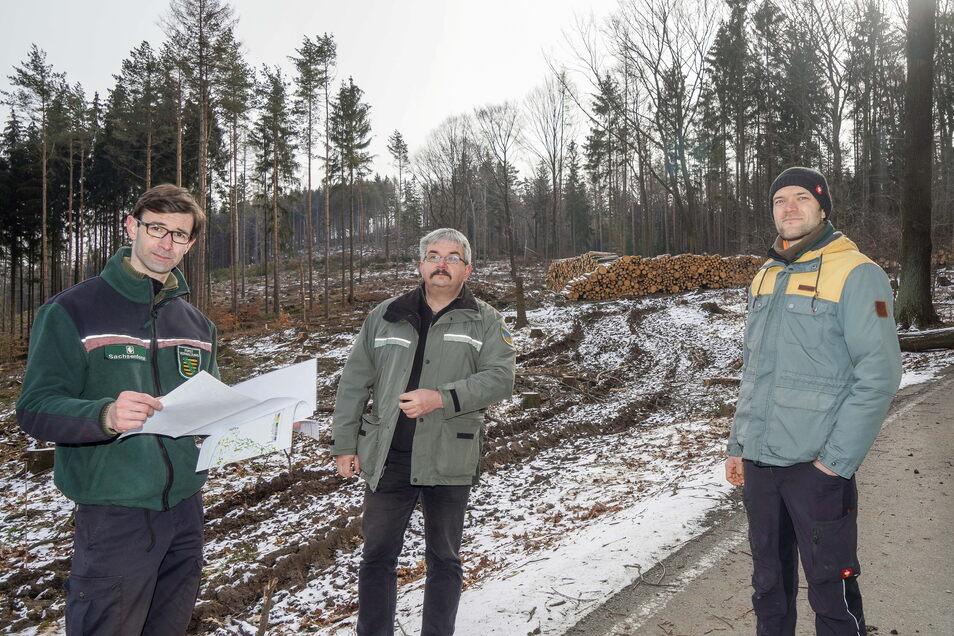 Frank Dietrich von Sachsenforst, Thomas Sobczyk vom Landratsamt und Revierförster Michael Haupt vom Domkapitel St. Petri (v.l.) sorgen sich um die Wälder im Landkreis Bautzen wie hier am Mönchswalder Berg bei Wilthen. Sie wollen gezielt aufforsten.