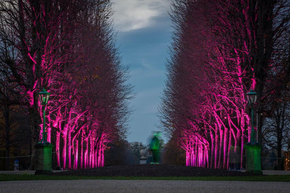 Bereits auf dem Weg zum Lustgarten gibt es eine wunderbare Lichtstimmung.