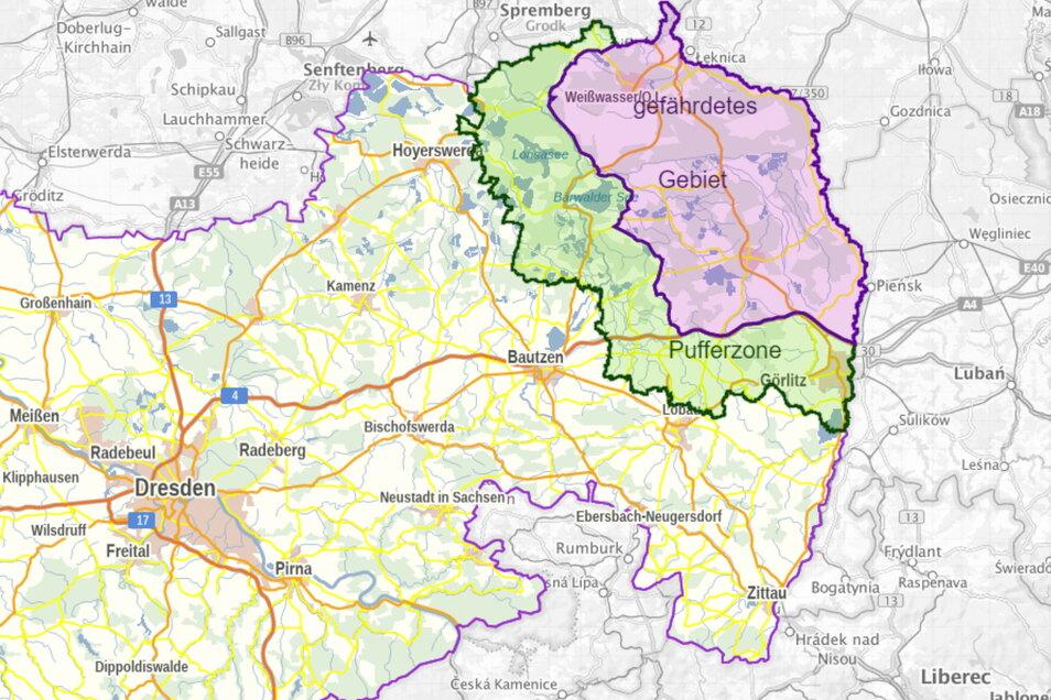 Mit Beschluss der Landesregierung wurde die Sperrzone vom vergangenen Jahr am 12. März erweitert. Die sogenannte Pufferzone reicht seither bis in den Landkreis Bautzen hinein.