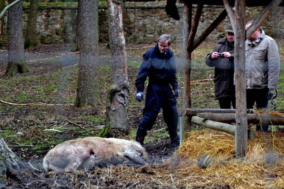 Pfleger fanden am Neujahrsmorgen den Körper des 14 Jahre alten Tieres. Der Kopf mit dem mächtigen 22-Enden-Geweih fehlte. Die Polizei ermittelt nun wegen Verstoßes gegen das Tierschutzgesetz.