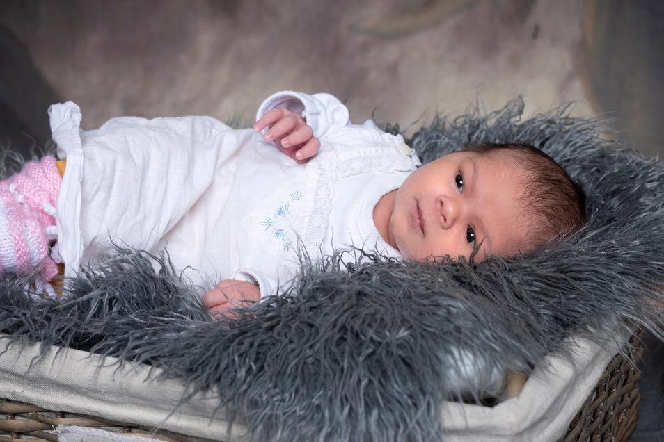 Elisa Helene Isolde, geboren am 7. April, Geburtsort: Kamenz, Gewicht: 3.390 Gramm, Größe: 48 Zentimeter, Eltern: Franziska und Benjamin Lederer, Wohnort: Weißig