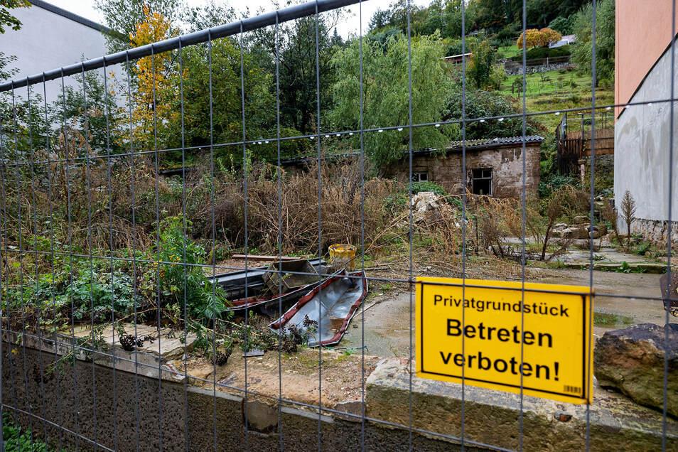 Verwilderte Ruine: das Grundstück an der Pirnaer Straße 21/23 in Königstein.