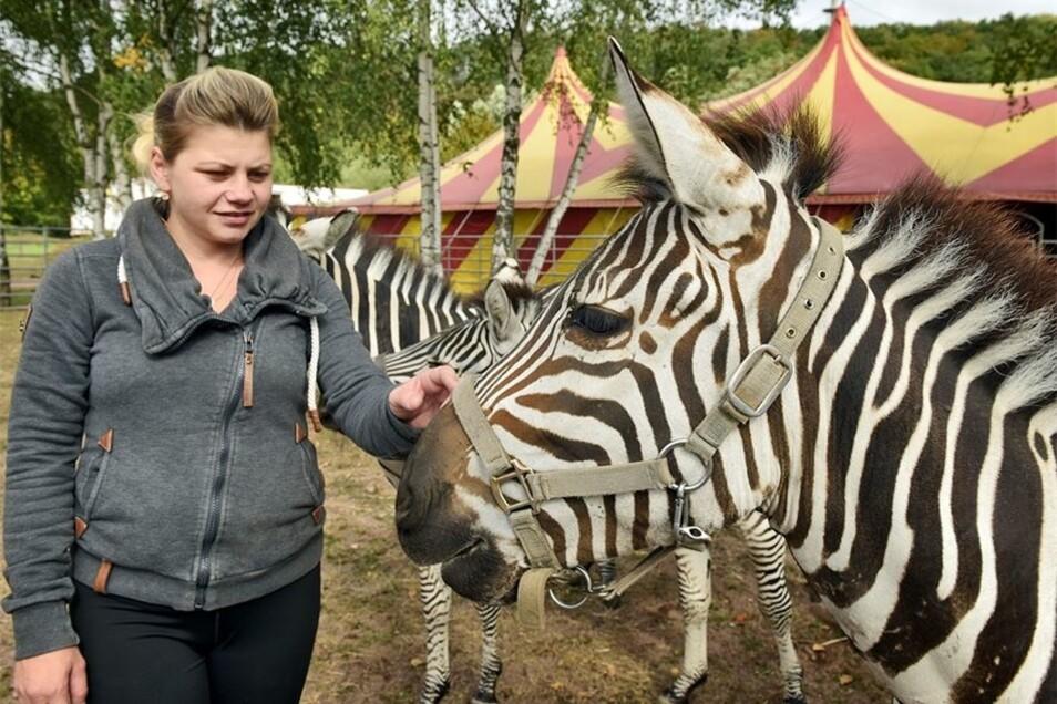 Auch die anderen Tiere des Zirkus haben in den Freigehegen Auslauf, wie die Zebras, die Stephanie Probst zeigt. Der Circus Probst ist nicht identisch mit dem ostdeutschen Zirkus Probst, entstammt aber der gleichen Zirkus-Dynastie.
