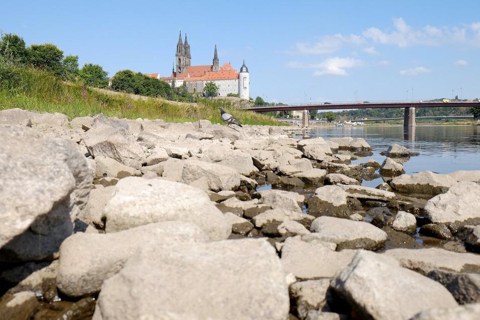 Die Elbe hat sich in den letzten Jahren immer häufiger weit in ihr Bett zurückgezogen. Der Klimawandel ist in der Region angekommen.