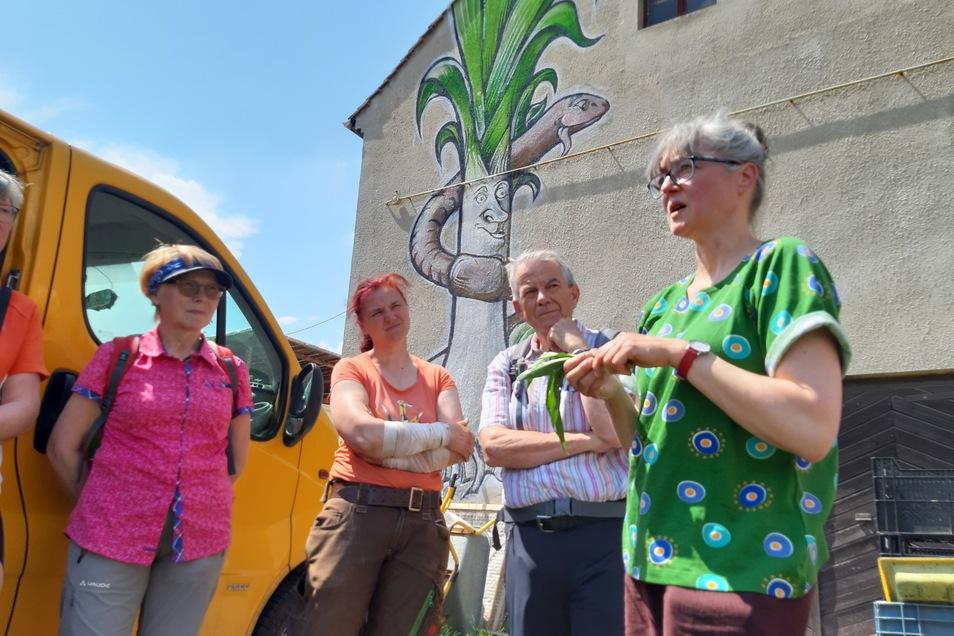 In der Biogärtnerei Schostek wird über die extensive Bewirtschaftung und der Wert von Ackerunkräutern und Wildgemüse informiert.